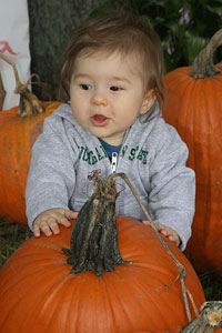 Pumpkins, corn maze and family fun in Manchester, Michigan, serving nearby Ann Arbor and Detroit.